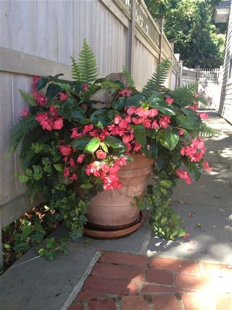 66 best Begonias images on Pinterest | Begonia, Container