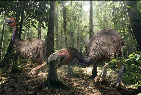 'Gastornis' lived in the Arctic about 50 million years ago