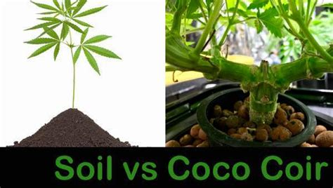 Coco Coir vs Soil: Which is Better for Grow Cannabis